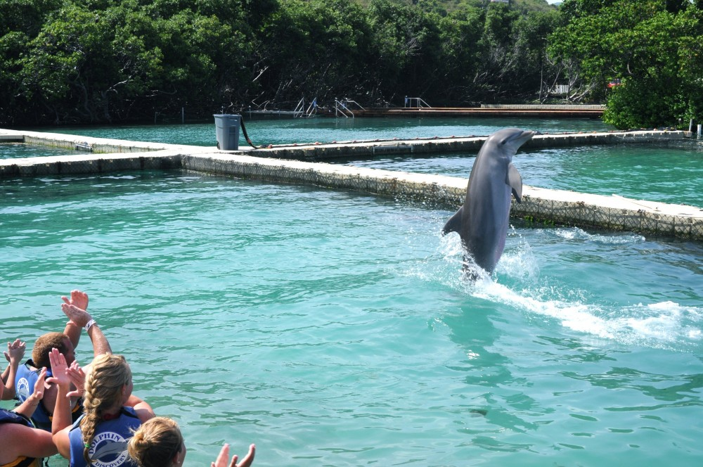 Dolphin Discovery Swim: Tortola