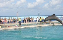Dolphin Lover's Swim: Grand Cayman (East)
