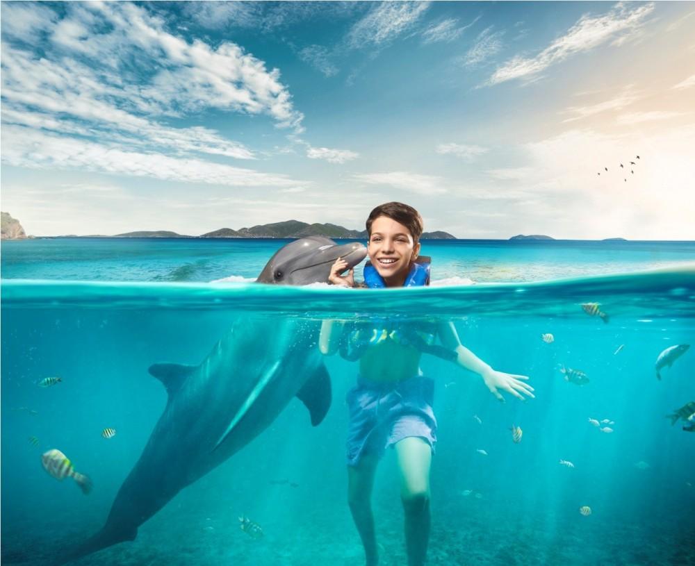 Dolphin Swim Adventure: Tortola
