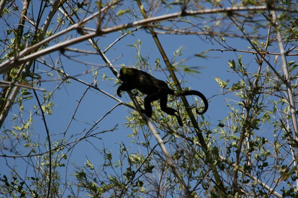 Monkey Park