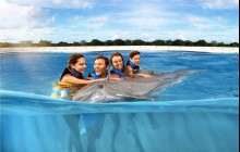 Dolphin Royal Swim: Punta Cana