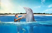 Dolphin Swim Adventure: Punta Cana