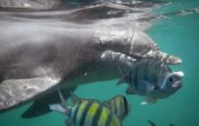 Dolphin Encounter: Riviera Maya Puerto Aventuras