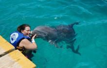 Dolphin Royal Swim: Isla Mujeres