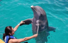 Dolphin Encounter + Royal Garrafon Park: Isla Mujeres