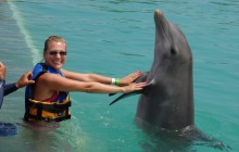 Dolphin Lovers Swim: Grand Cayman (West)