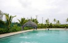 Dolphin Royal Swim: Grand Cayman (West)