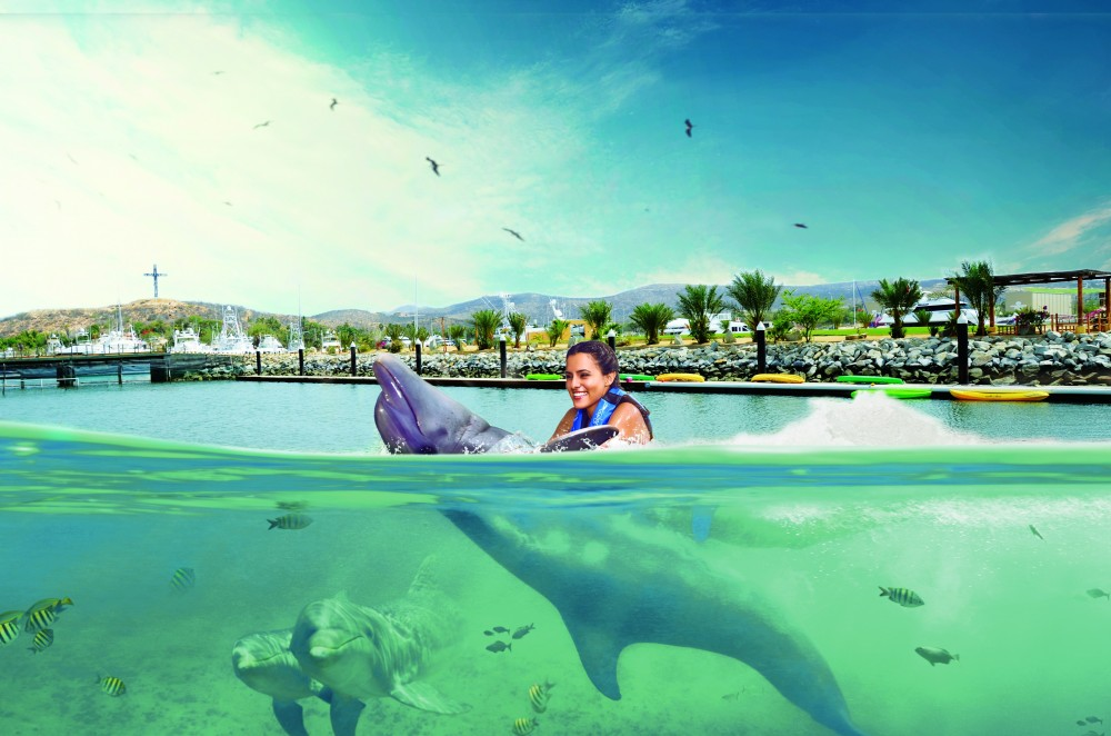Dolphin Encounter: Los Cabos