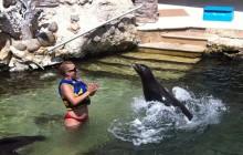 Dolphin Swim Adventure Plus: Riviera Maya Puerto Aventuras