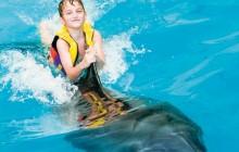 Swim With Dolphins Dubai