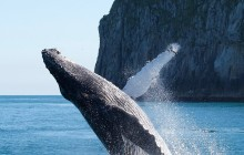 3.5 Hour Kenai Fjords Wildlife Cruise