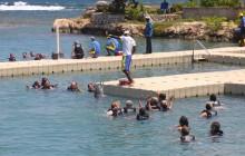 Dolphin Cove – Ocho Rios