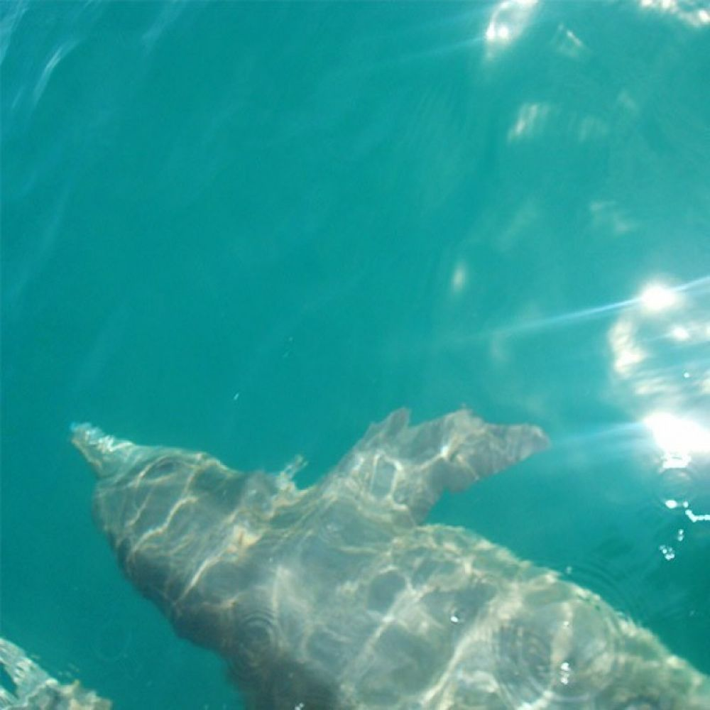 Chiriqui Gulf Island Tour