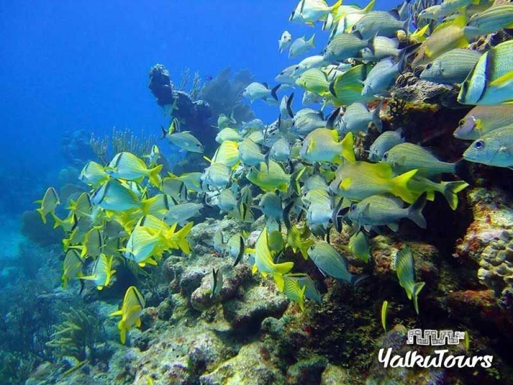 Tulum Ruins, Grand Cenote & Snorkeling