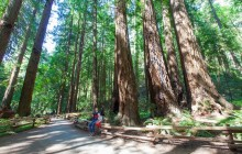Muir Woods Expedition & Sausalito Tour AM