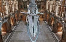 Natural History Museum London Semi Private Guided Tour