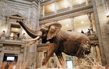 Guided Tour of the Metropolitan + Natural History Museum