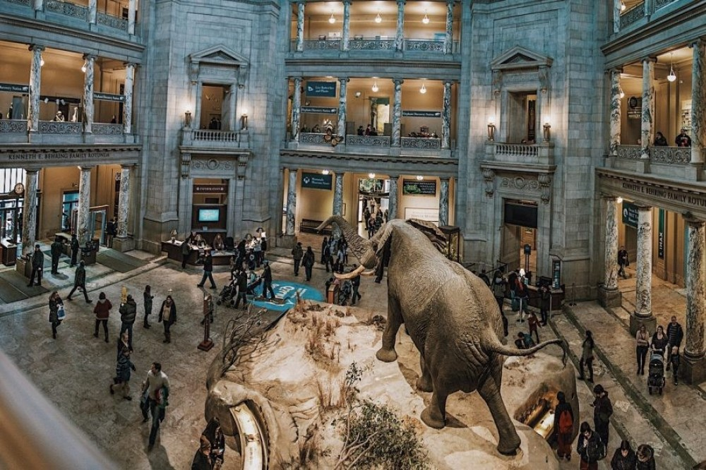 Smithsonian Natural History Museum Private Tour