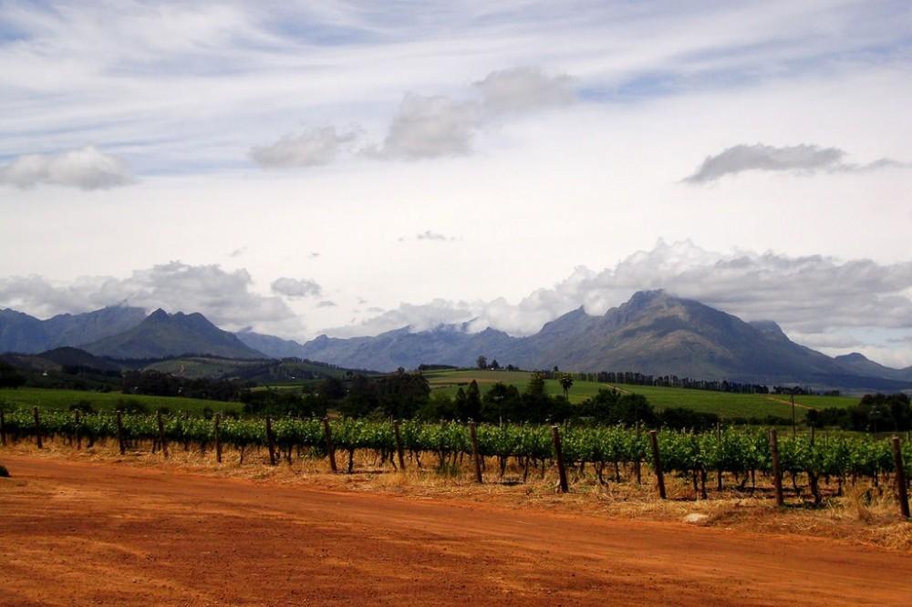 Simonsig Wine Estate