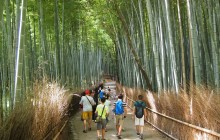 Western Kyoto: Forest Spirits of Bamboo and Zen