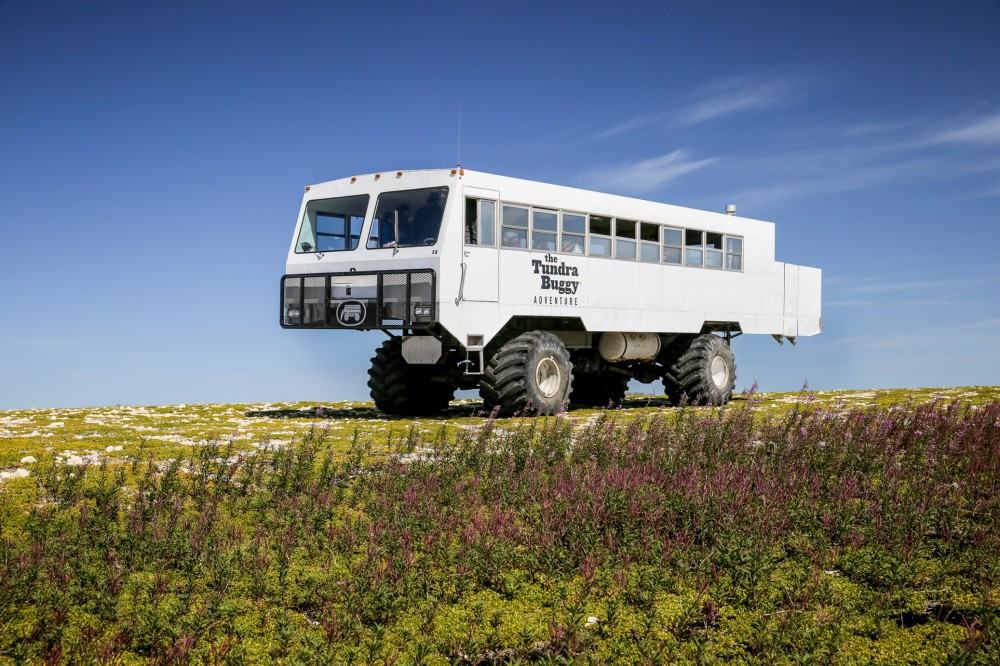Summer Tundra Buggy Day Tours