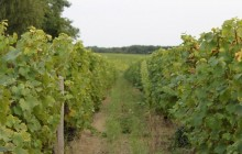 Private Loire Valley Must Taste: Vouvray + Bourgueil + Chinon