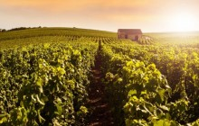 Small Group Picturesque Epernay + Champagne Tasting Day Tour