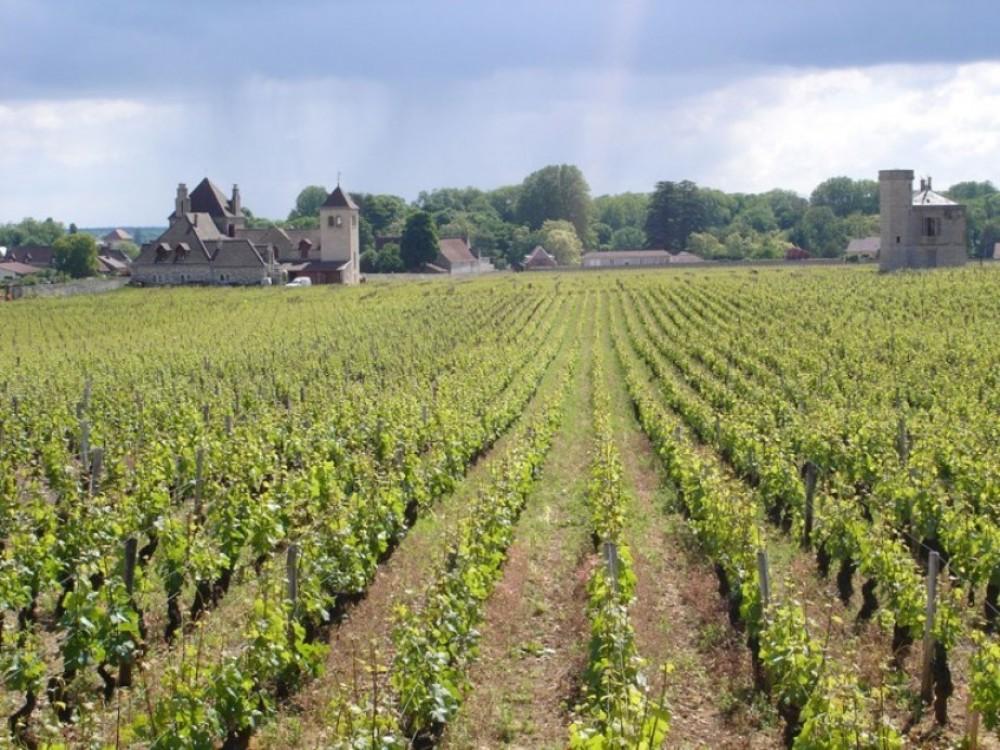 Private Côte de Nuits Burgundy Day tour