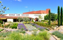 Small Group Provence Lavender Fields Tour with Wine Tasting