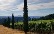Private Wine Tour - 4 People