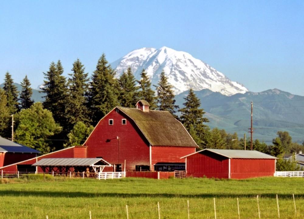 Mt. Rainier Day Tour