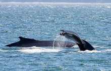 Whale Watching Tour – Spring