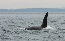 Open Boat Whale Watching Tour - Summer - Whale Guarantee