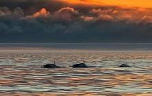 Whale Watching at Sunset Tours in Open Boat - Whale Guarantee