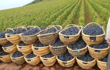 Medoc Half Day Shared Wine Tour from Bordeaux