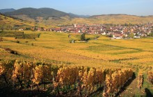 Private Grands Crus Wines of Alsace