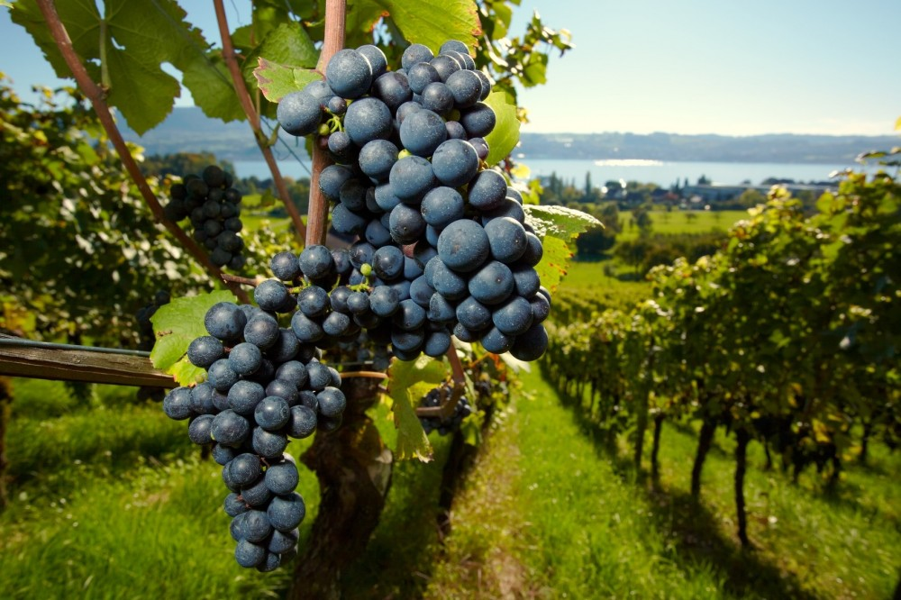 90+ Points Wines of the Left Bank Private Tour