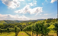 Private Bairrada Wine Tour Full Day Tour from Porto