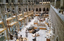 Natural History Museum London Private Guided Tour