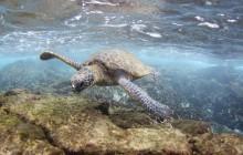 Hidden Gems of Oahu Plus North Shore Snorkel
