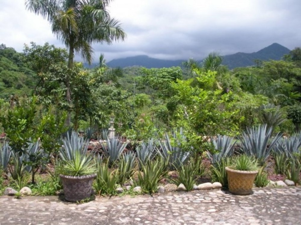 Botanical Gardens and El Tuito Private Tour