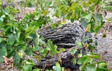 Santorini Wine Experts Private Tasting Tour