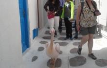 Walking Tour of Mykonos Town