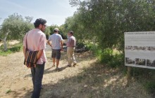 Small Group Olive Oil Tasting & Carmona