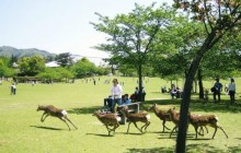 Private Nara Tour by Taxi from Osaka