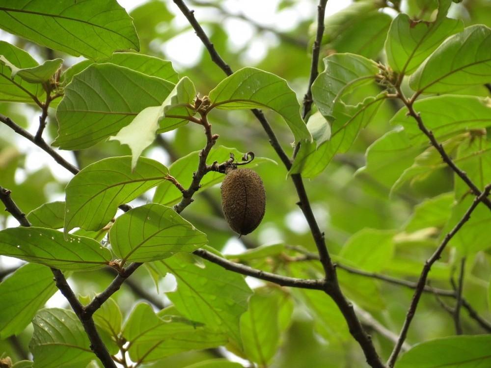 Nilgiri Biosphere Nature Park