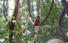 Monkey Island - Peru