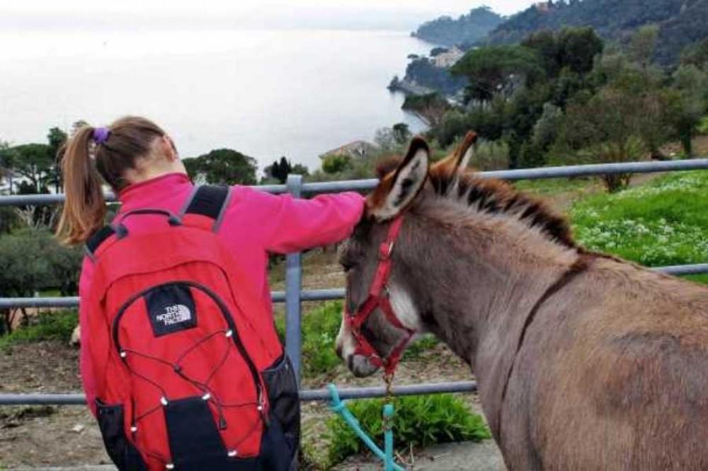 Donkey Trekking Portofino Sunset