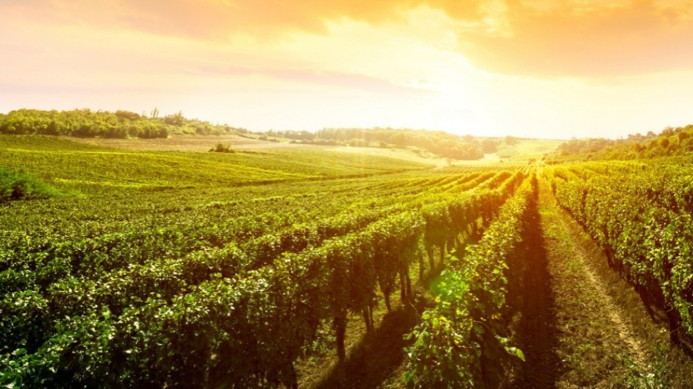 Tagus Vineyards Private Wine Tour