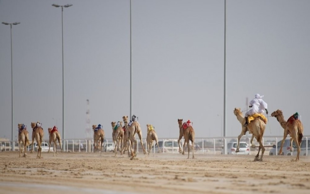 Private Sheikh Faisal, Camel Race Track & Equestrian Club Tour